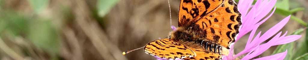 Attention à l'effet papillon dans le domaine spirituel
